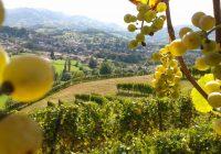 Investir dans un domaine viticole dans les meilleures conditions